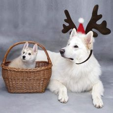 Benepaw Christmas Reindeer Antlers Dog Hat Adjustable Elastic Strap Headband Classic Headwear Party Pet Costumes Accessories