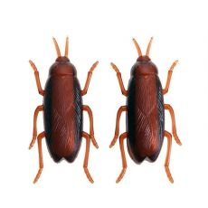 1PC Funny Simulation of Cockroaches Pet Cat Dog Kitten Interactive Training Play Toy