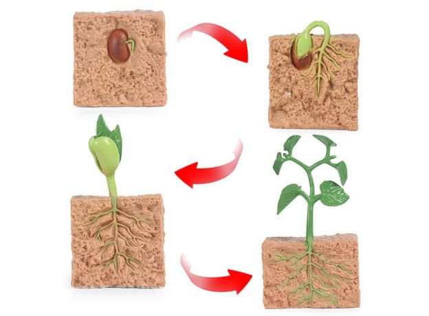 Kids Plant Seeds Growth Life Cycle Playset Cognitive Toys Teaching Aids